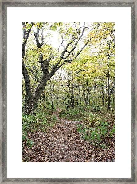 Light On Path Framed Print