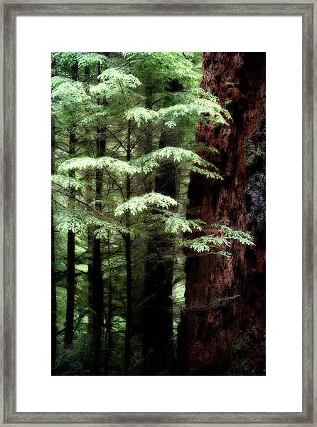 Light On Trees Framed Print