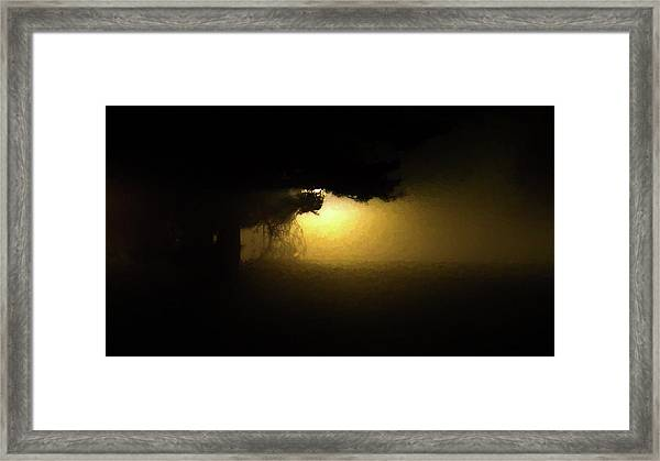 Light Through The Tree Framed Print