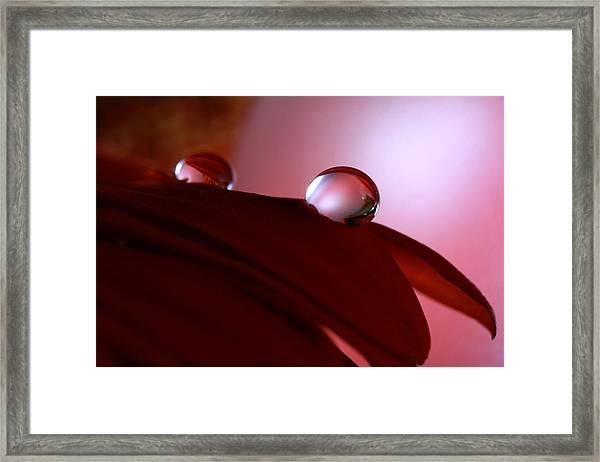 Light Water Drop On Dark Petals Framed Print