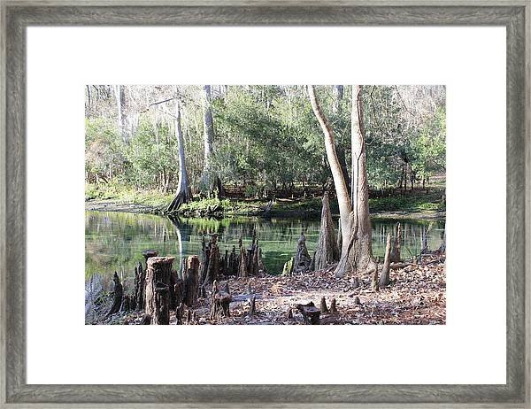 Lighted Springs Framed Print by Michelle Barone