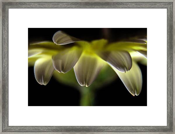 Lighting Up The Petals Framed Print
