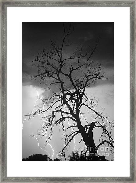 Lightning Tree Silhouette Portrait Bw Framed Print