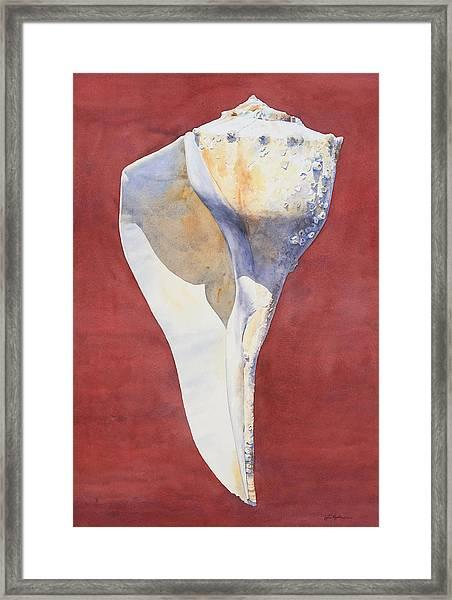 Lightning Whelk Conch I Framed Print