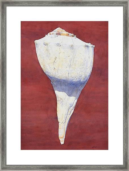 Lightning Whelk Conch II Framed Print