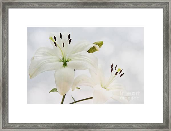 White Lilith Framed Print