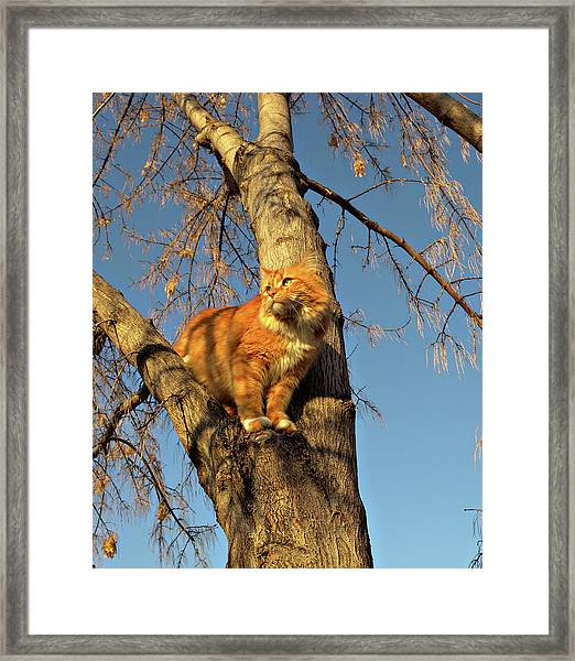 Like The Big Boys Framed Print by ShaddowCat Arts - Sherry