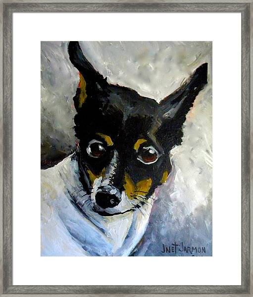 Lil Rat Terrier Framed Print