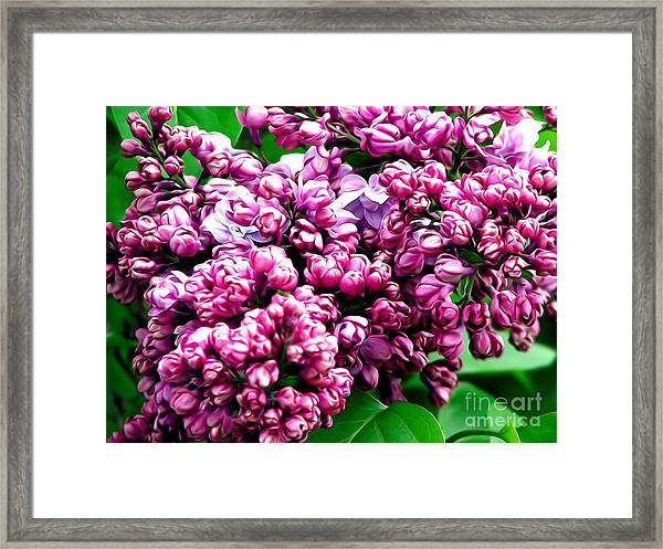 Lilac Blossoms Abstract Soft Effect 1 Framed Print
