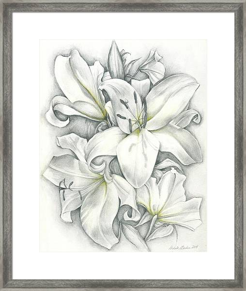 Lilies Pencil Framed Print
