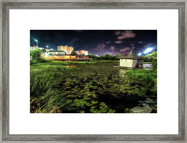 Lilly Pads On The Pond Framed Print