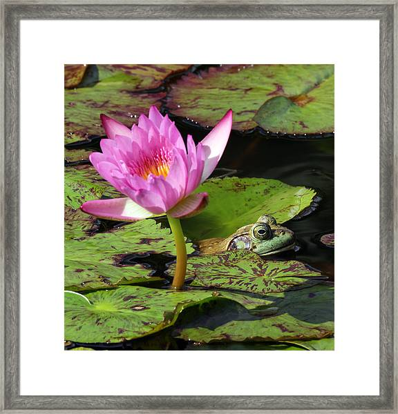 Lily And The Bullfrog Framed Print