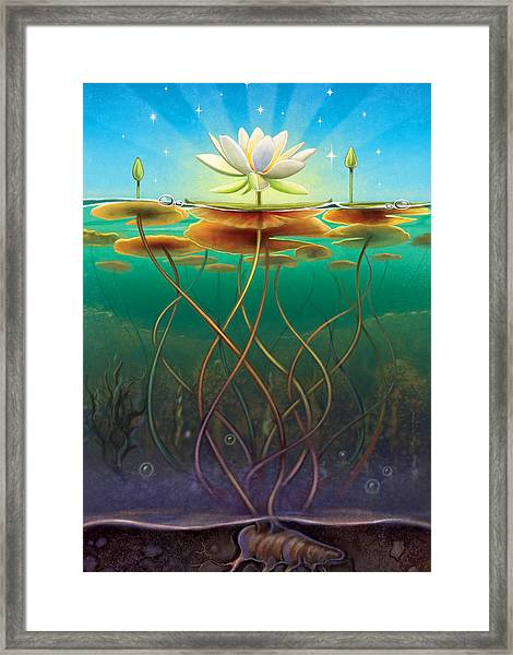 Water Lily - Transmute Framed Print