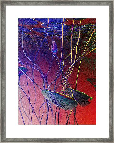 Lily Bud Framed Print by Georgia Bassen