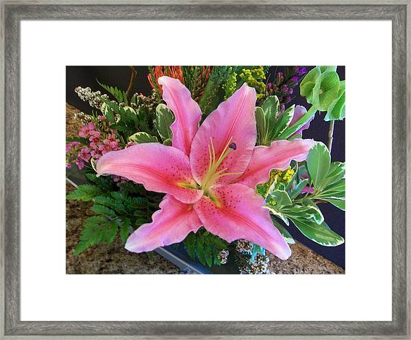 Lily Dressed In Pink Framed Print by Marsha Heiken