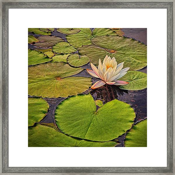 Lily In The Pads Framed Print