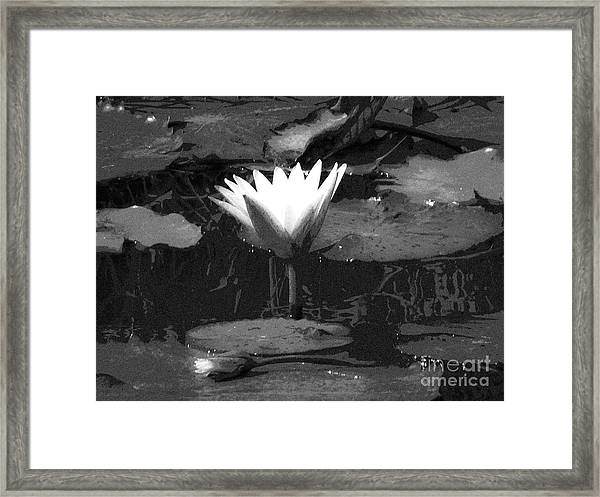 Lily Of The Lake Framed Print