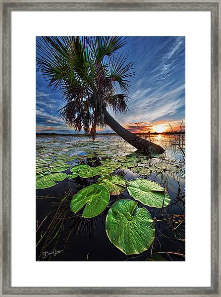 Framed Print featuring the photograph Lily Pads And Sunset by David A Lane