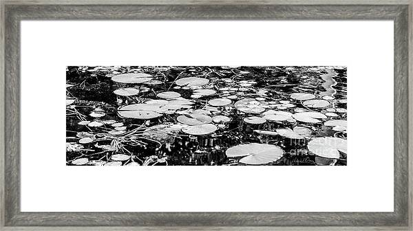 Lily Pads, Black And White Framed Print