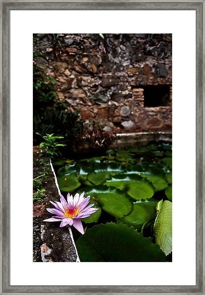 Lily Pond In Ruins. Usvi Framed Print