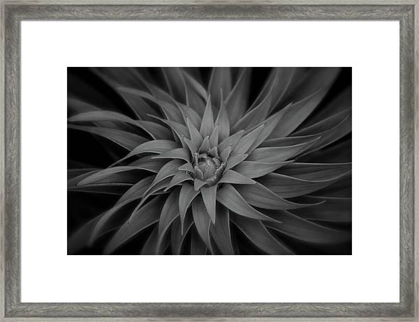 Lily Swirl Framed Print