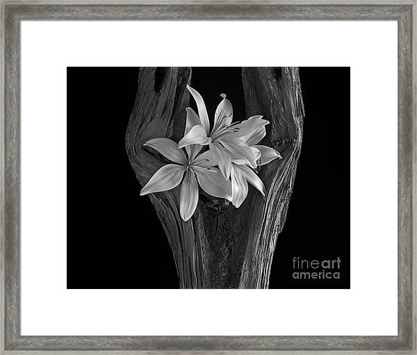 Lily Tree II Framed Print