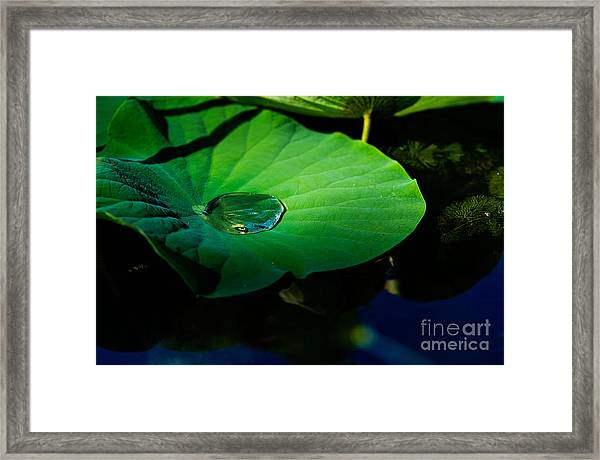 Lily Water Framed Print