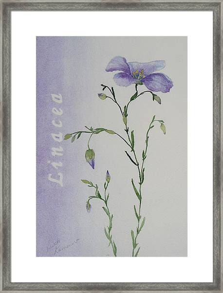 Linacea Framed Print