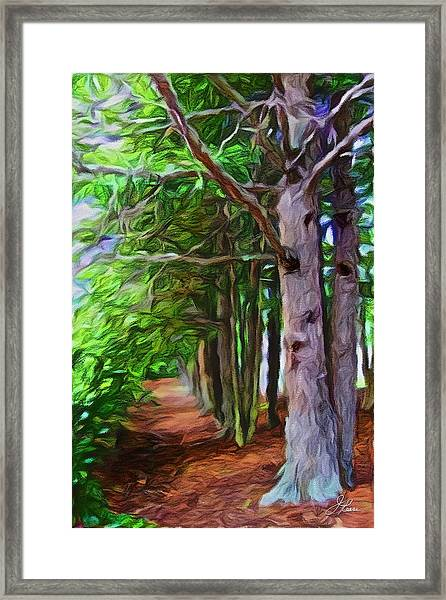 Lincoln's Path Framed Print