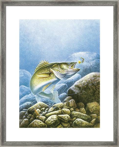 Lindy Walleye Framed Print