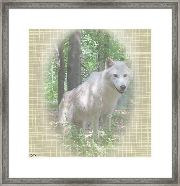 Linen Wolf Pose Framed Print by Debra     Vatalaro