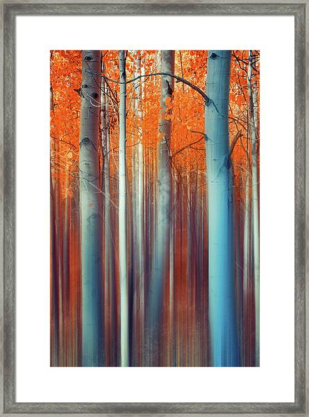 Lines Of Autumn Framed Print