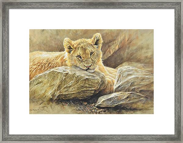Lion Cub Study Framed Print