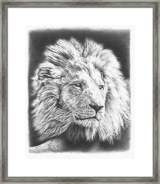 Fluffy Lion Framed Print