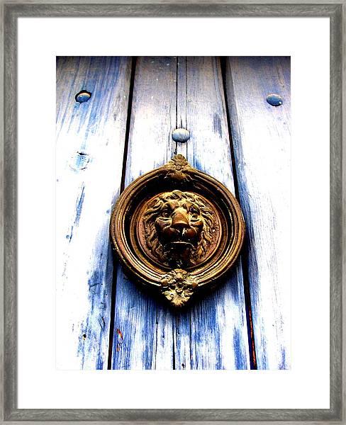 Lion Dreams Framed Print