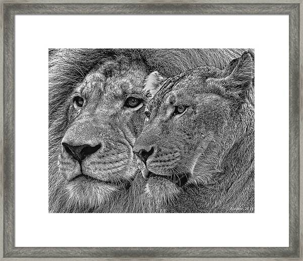 Lion King And Queen Framed Print