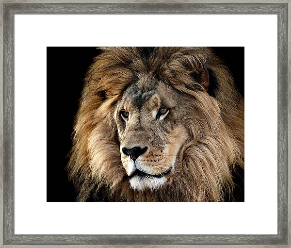 Lion King Of The Jungle 2 Framed Print