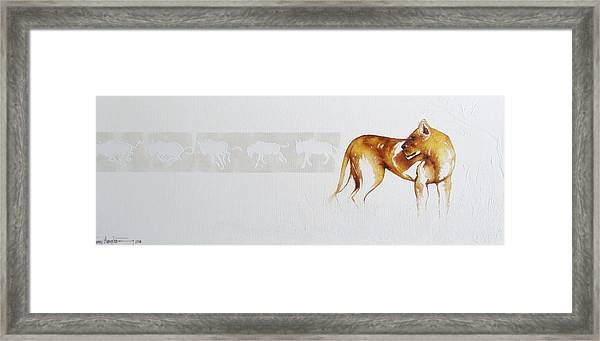 Lioness And Wildebeest Framed Print