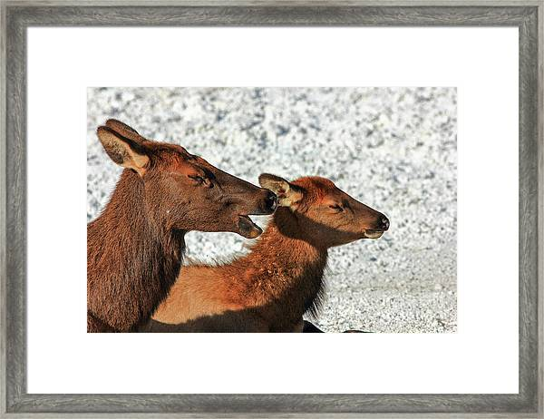 Listen Dear Framed Print