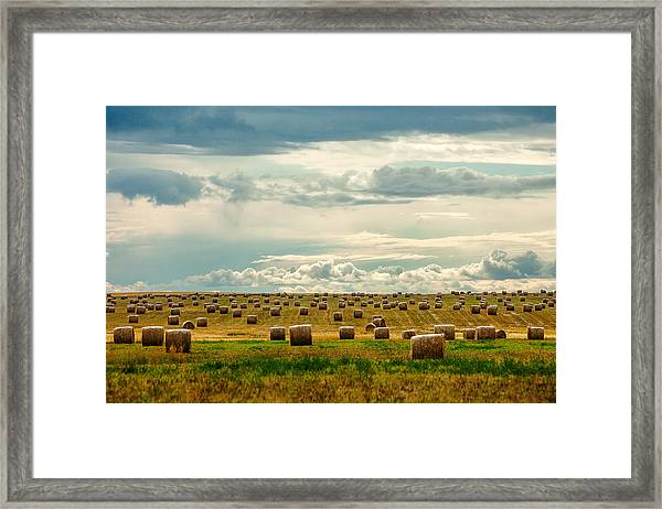Littered With Bales Framed Print