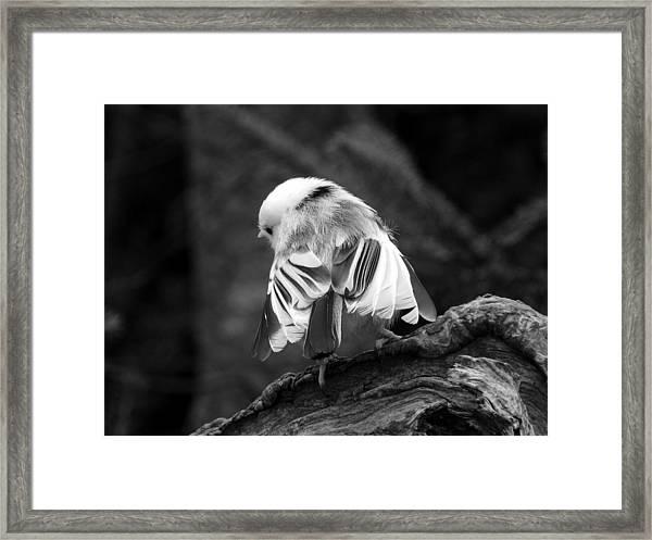 Little Ballerina Framed Print