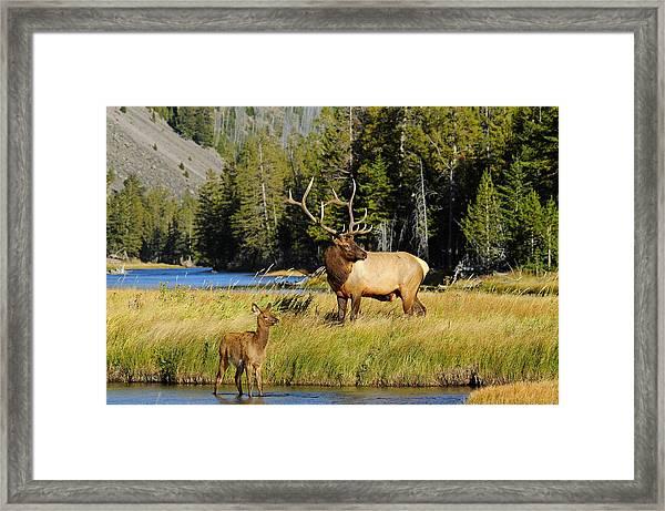 Little Big Man Framed Print by Sandy Sisti