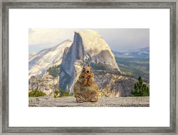 Little, Big Squirrel Framed Print