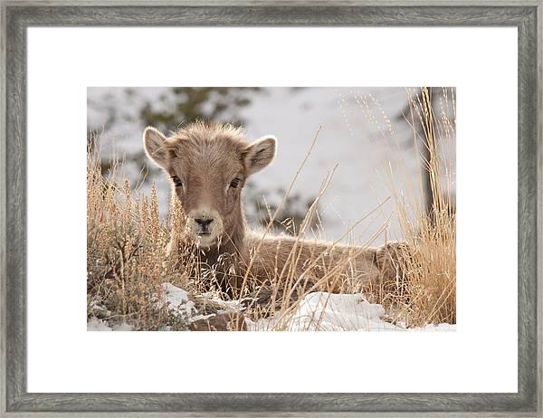 Little Bighorn Framed Print