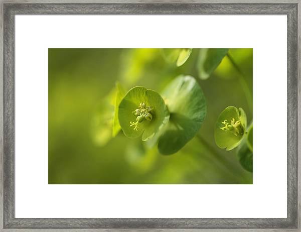 Green Power Framed Print