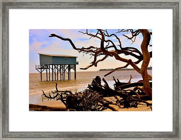 Little Blue Hunting Island State Park Beaufort Sc Framed Print