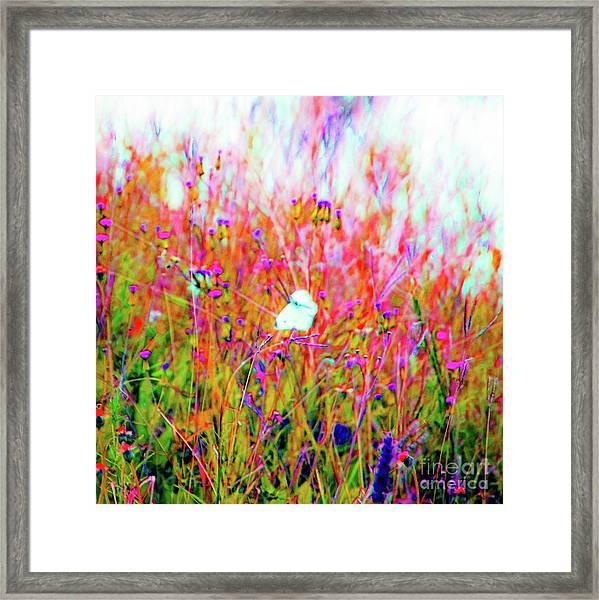 Little Butterfly Fly Framed Print