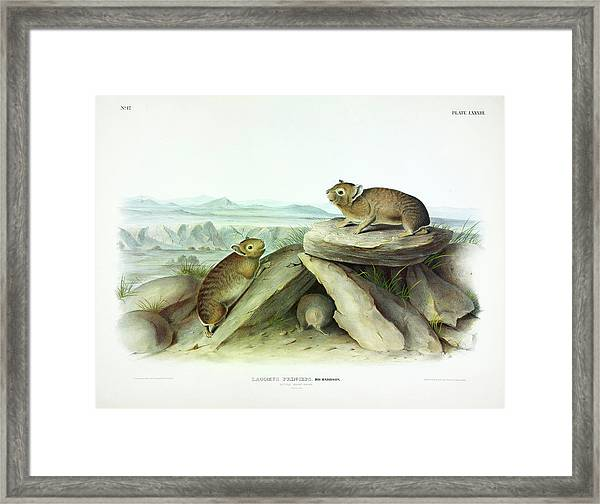 Little-chief Hare Framed Print