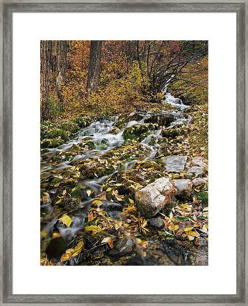 Little Creek Framed Print