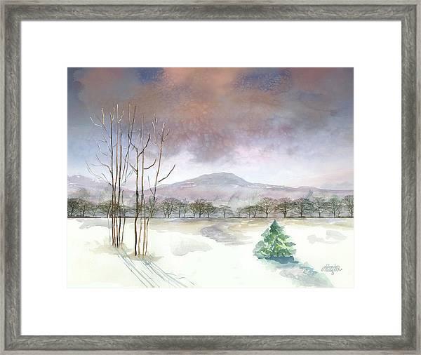 Little Forlorn Pine Framed Print